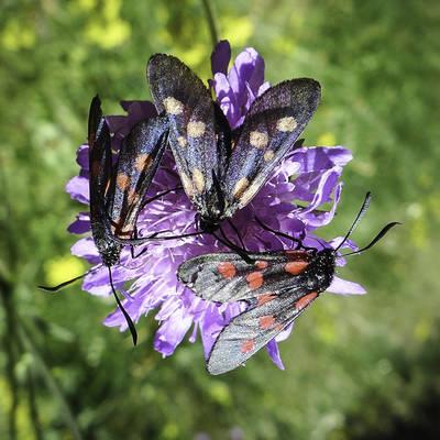 Rando carr%c3%a9 papillon